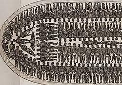 slave boat